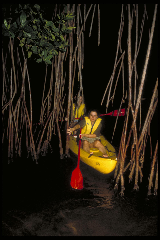 kayaking in bio bay