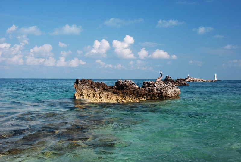 Isla_Mujeres,_Pelicanos_(24374202586)