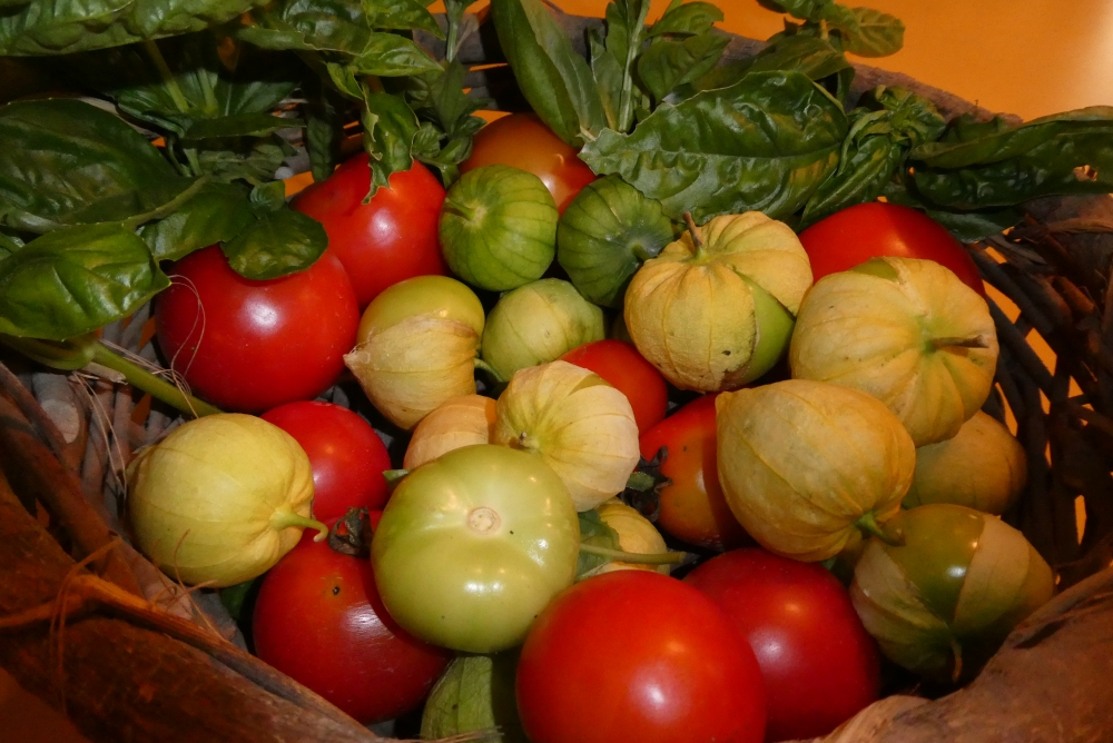 tomatoes, tomatillos, peppers and basil